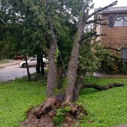 Down tree at fourplex