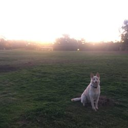 Dog park, things to do at 5am