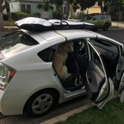 Prius with dog