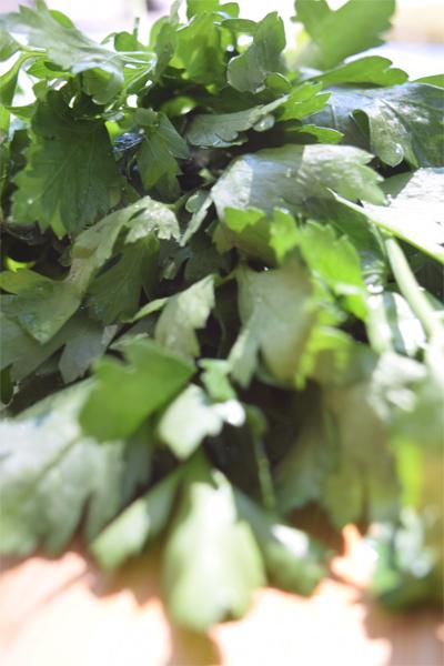 close up of italian parsley 5 dog farm