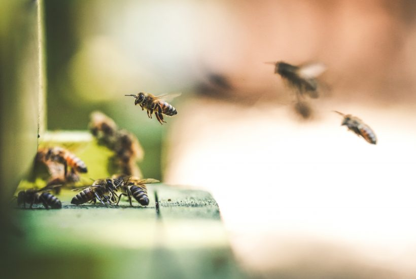 bees flying around hive