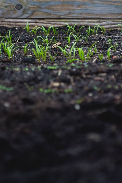 rich soil with green sprouts 5 DogFarm