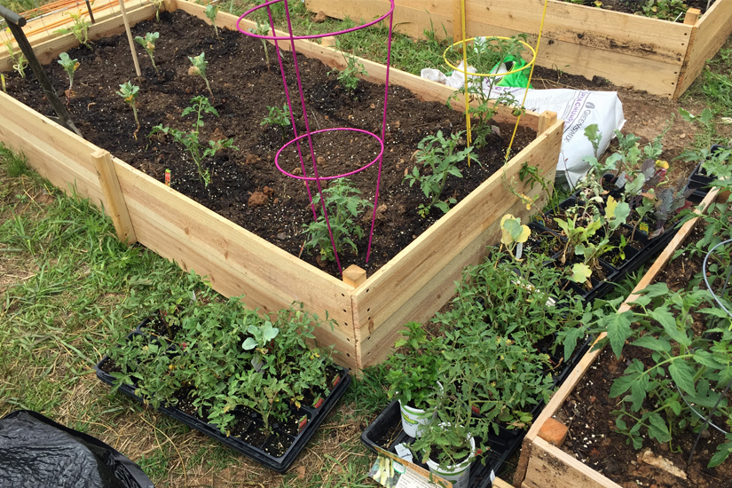 raised bed with soil and plants 5DogFarm