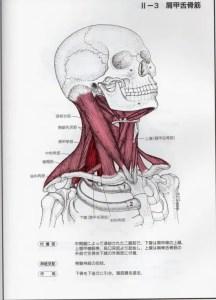 肩甲舌骨筋