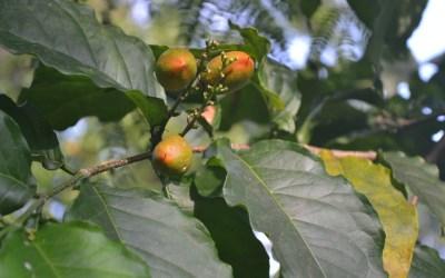 5EyesFarm produce