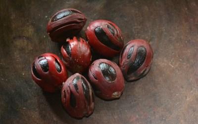 Nutmeg – a healing spice
