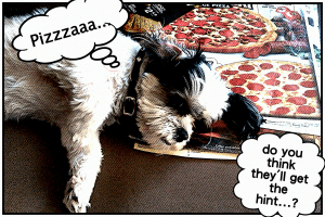 My dog agrees - pizza is a runners fuel