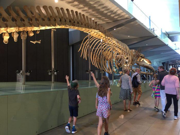 Melbourne Museum dinosaurs