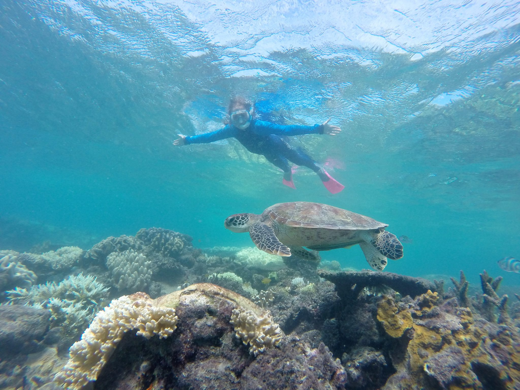 Snorkel turtle