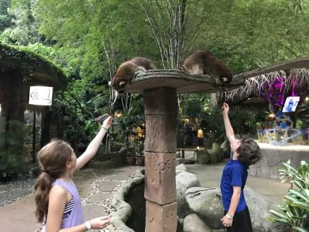 Petting zoo Lost World