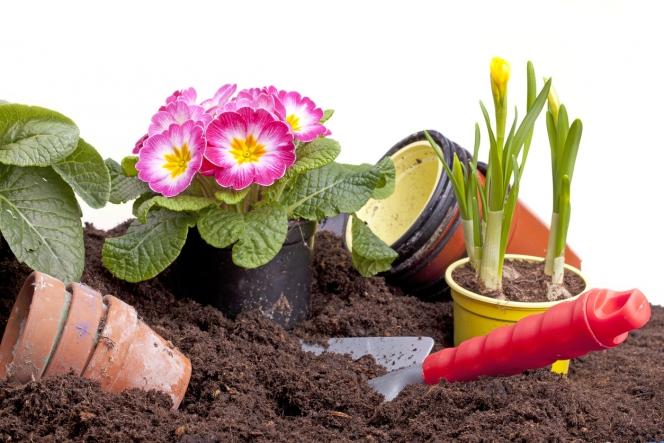 Jardinage Preferez Les Terreaux Sans Tourbe 60 Millions De Consommateurs