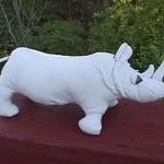 SA rhino1