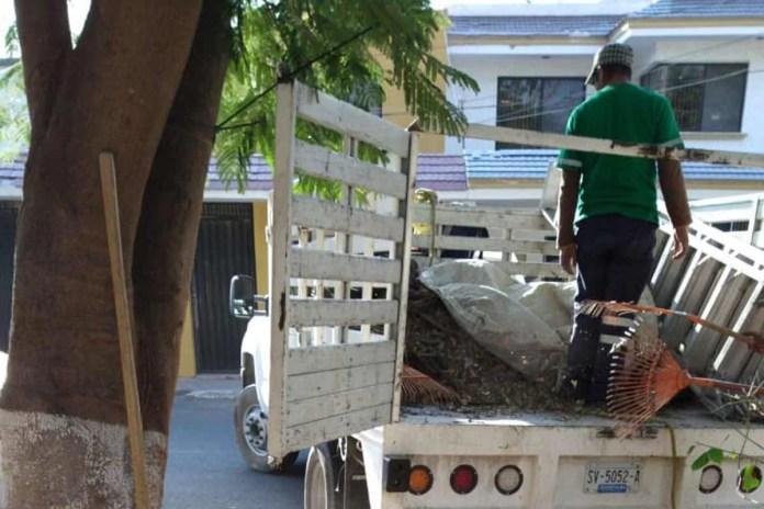 Iniciará Corregidora campaña de recolección de árboles navideños