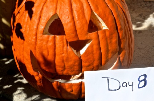 """Extend The """"Life"""" of Your Jack-O-Lantern - 719woman.com"""
