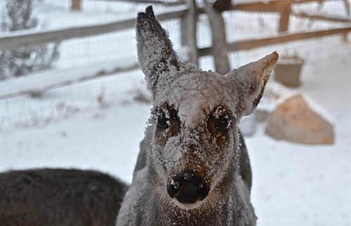 Helpful Tips On Keeping Your Pets Healthy & Happy During Cold Weather - 719woman.com