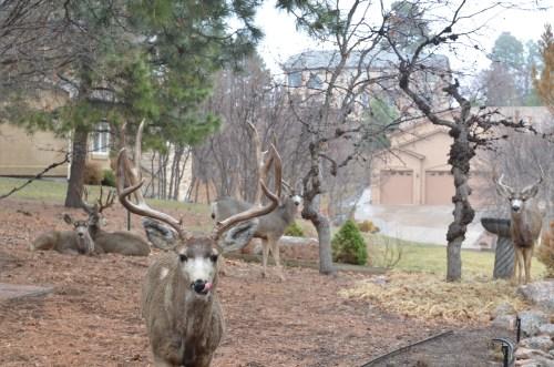 My New Favorite Natural Deer Repellent. - 719woman.com