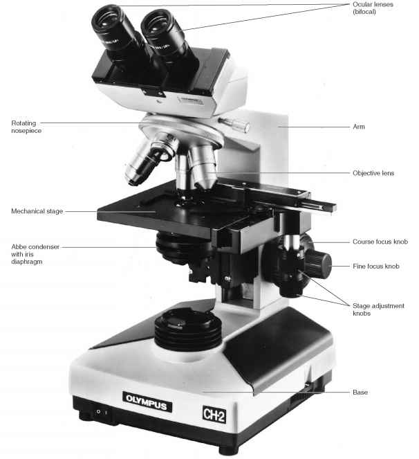Compound Light Microscope Parts And Functions Worksheet
