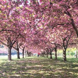 Brooklyn Botanical Garden.