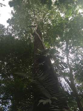 A parasite tree.