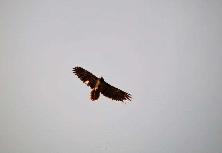birdwatching parc natural tinença de benifassa