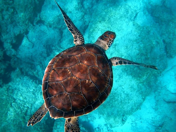 World Turtle Day: What Are The Threats and What Can You Do To Help? – by Hannah Rudd
