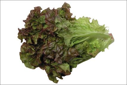 Pluksalat rød (Egeblad)