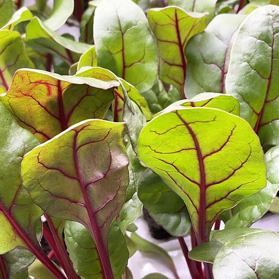 80 Acres Farms POWER crunch Leafy Greens