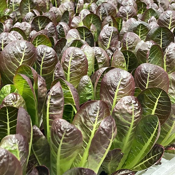 80 Acres Farms Queen City Leafy Greens