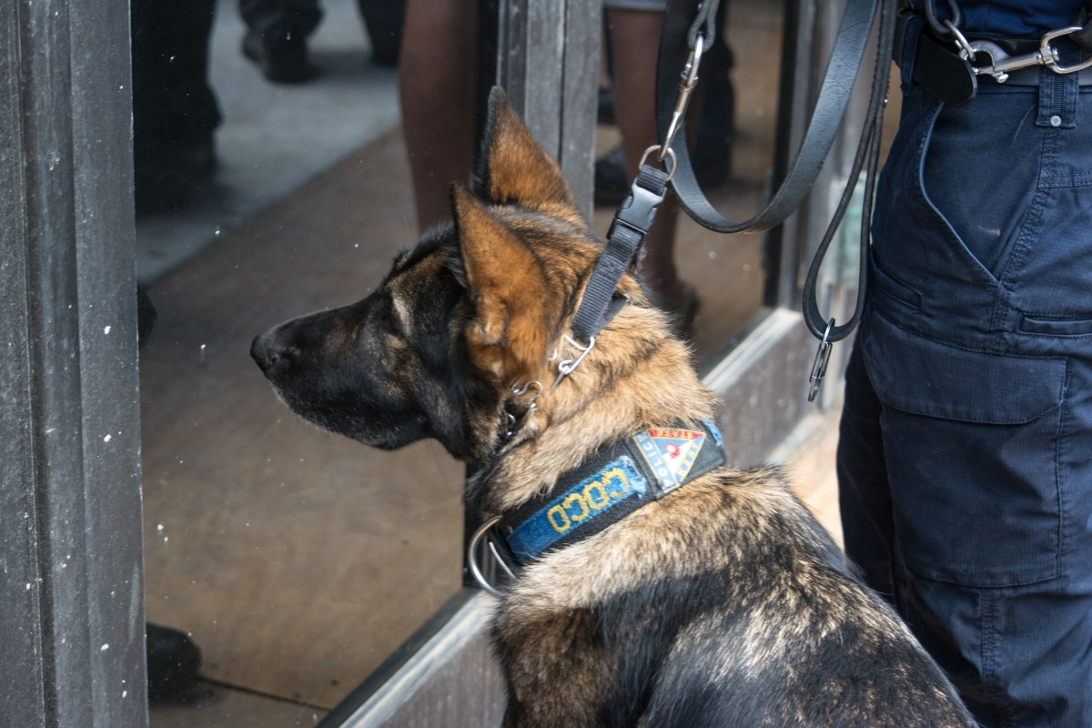 The Supreme Court's 'alternative facts' about drug-sniffing dogs