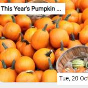 This Year's Pumpkin Harvest Jigsaw