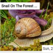 Snail On The Forest Floor Jigsaw