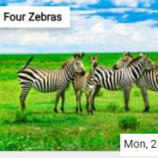 Four Zebras Jigsaw