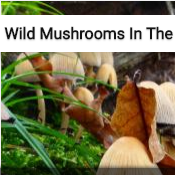 Wild Mushrooms In The Forest Jigsaw Puzzle Game