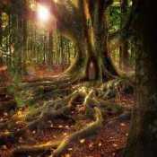 FUN Tree House Forest Escape