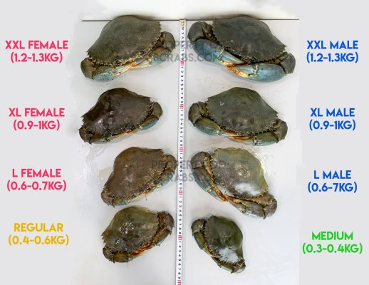 All crabs live size