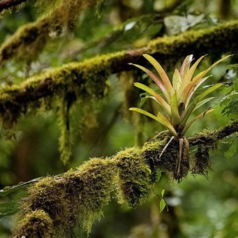 СОЗВЕЗДИЕ: Экваториальные леса.