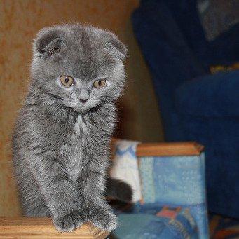 Как правильно кормить кошку натуралкой?