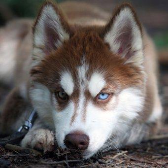 Как определить и вылечить лишай у собаки