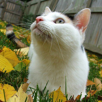 У кошки болячка на губе - причина беспокойства