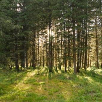 Бескрайняя тайга: растения и животные таежных лесов
