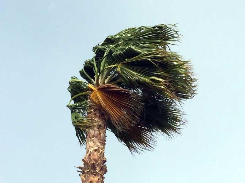Wind_palm_tree_800_1447705866524.jpg