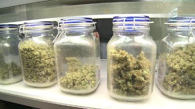 Mass-medical-marijuana-jpg_20151013132643-159532