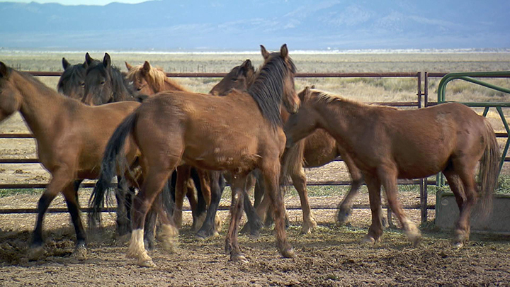 wildhorses_700_1471494864129.jpg