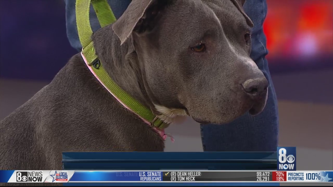 Majesty the dog is looking for a home