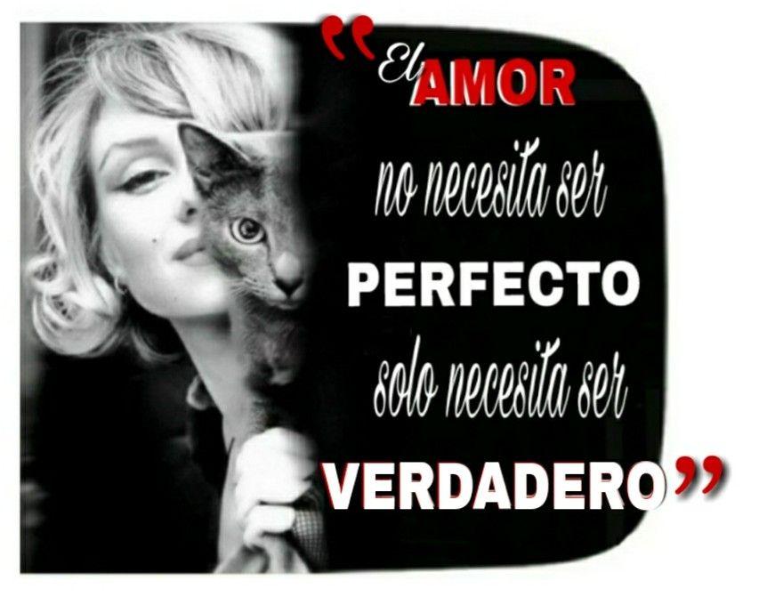 8 Sorbos De Inspiracion Cita De Marilyn Monroe El Amor Verdadero