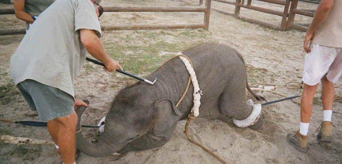 """paternesi.com: """"Vietiamo di ospitare in città il circo con animali"""""""