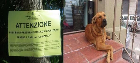 """""""Cani avvelenati, servono misure preventive, di gestione e repressive"""""""