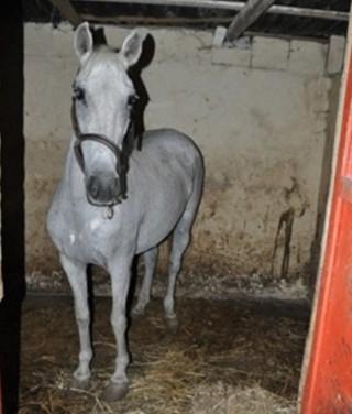 foto 7 cavallo