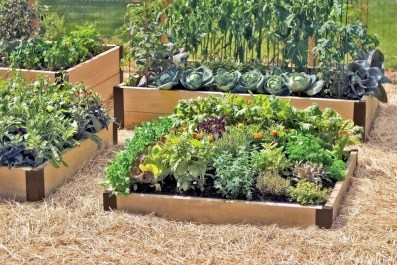 Unusual Vegetable Garden Ideas For Home Backyard 14