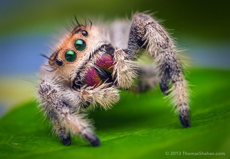Awsome Macro Photography Spider
